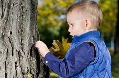 Kleiner Junge, der einen Baum überprüft Stockfotografie