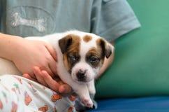 Kleiner Junge, der einen Steckfassungsrussel-Terrierwelpen umarmt Er ` s, das den Hund auf seinen Händen hält Lizenzfreies Stockbild