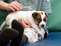 Kleiner Junge, der einen Steckfassungsrussel-Terrierwelpen umarmt Er ` s, das den Hund auf seinen Händen hält Stockfoto