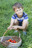 Kleiner Junge, der Korb mit organischem Gemüse auf dem grünen Gras hält draußen Kürzlich geerntete Tomaten Lizenzfreie Stockfotografie