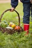 Kleiner Junge, der Korb mit organischem Gemüse auf grünem Gras hält Lizenzfreie Stockfotos