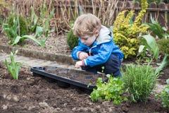 Kleiner Junge, der Samen im Gemüsegarten pflanzt Stockfotografie