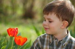 Kleiner Junge, der Tulpe betrachtet Stockbilder
