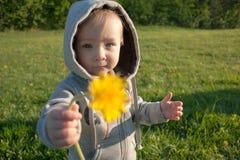 Kleiner Junge hält einen gelben Löwenzahn zur Mutter und zum Vati lizenzfreie stockfotos