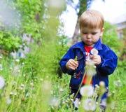 Kleiner Junge im Löwenzahn Stockfotografie
