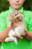 Kleiner Junge mit einem Kaninchen in seinen Händen Lizenzfreie Stockbilder