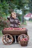 Kleiner Junge, mit einer Laufkatze voll von den Äpfeln Stockbild
