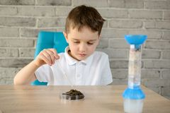 Kleiner Junge mit einer Pipette überprüft eine Probe des Bodens Lizenzfreie Stockbilder