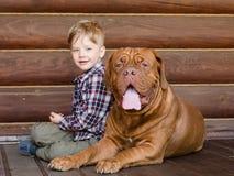 Kleiner Junge mit großem Bordeauxhund Stockfotos