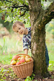 Kleiner Junge mit Korb von Äpfeln Lizenzfreies Stockfoto