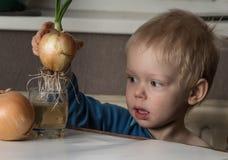 Kleiner Junge mit zwei Birnen von frischen Zwiebeln Stockfoto