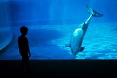 Kleiner Junge vor einem Delphin Lizenzfreies Stockbild