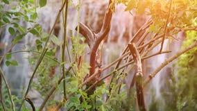 Kleiner künstlicher Wasserfall durch die grünen Blätter stock footage