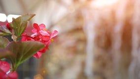Kleiner künstlicher Wasserfall durch die grünen Blätter Rosa Blume stock footage