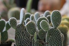 Kleiner Kaktus Lizenzfreie Stockfotos
