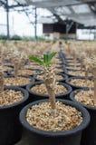 Kleiner Kaktus Stockbild