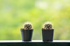 Kleiner Kaktus auf Unschärfehintergrund stockbild