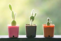 Kleiner Kaktus auf Unschärfehintergrund stockfoto