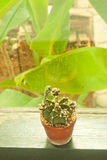 Kleiner Kaktus, der mit Retro- Filtereffekt verziert Stockbild