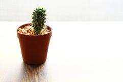 Kleiner Kaktus in einem Blumentopf, heller Hintergrund Stockfotos