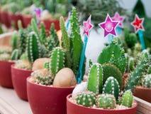 Kleiner Kaktus in einem Plastiktopf mit Herz-förmigem Zeichen und Lächeln stockbild