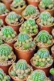 Kleiner Kaktus in einem Potenziometer Lizenzfreies Stockbild