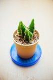 Kleiner Kaktus für verziert Lizenzfreies Stockfoto