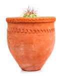 Kleiner Kaktus gepflanzt auf einem roten Tongefäß Stockbilder