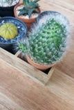Kleiner Kaktus hellgrün im Topf mit hölzernem Hintergrund Lizenzfreies Stockbild