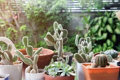 Kleiner Kaktus im Topf, in den Succulents oder im Kaktus Lizenzfreie Stockfotografie