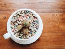 Kleiner Kaktus und bunte Steine in der Kaffeetasse Stockbild