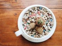 Kleiner Kaktus und bunte Steine in der Kaffeetasse Abschluss oben Lizenzfreies Stockfoto