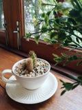 Kleiner Kaktus und bunte Steine in der Kaffeetasse in der Kaffeestube Lizenzfreies Stockbild