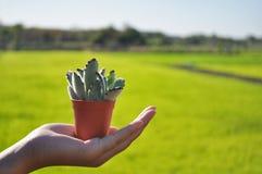 Kleiner Kaktustopf in der Hand stockbild