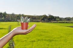 Kleiner Kaktustopf in der Hand stockbilder