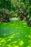 Kleiner Kanal voll der Entengrütze Stockfotos