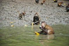 kleiner kleiner netter Affe essen Lizenzfreies Stockfoto
