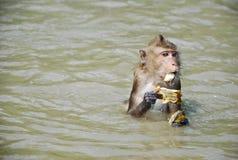 kleiner kleiner netter Affe essen Lizenzfreie Stockfotografie