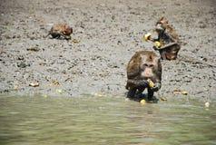 kleiner kleiner netter Affe essen Lizenzfreie Stockfotos