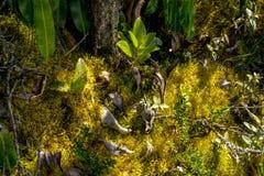 Kleiner kleiner Wald im wilden Lizenzfreie Stockbilder