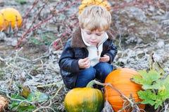 Kleiner Kleinkindjunge auf Kürbisfleckenfeld Lizenzfreie Stockbilder