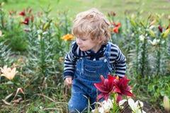 Kleiner Kleinkindjunge auf Lilienfeld im Sommer lizenzfreies stockbild