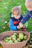 Kleiner Kleinkindjunge, der Apfel isst Stockbilder
