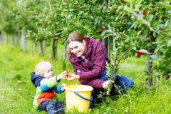 Kleiner Kleinkindjunge und -mutter, die rote Äpfel im Obstgarten auswählt Lizenzfreie Stockfotografie