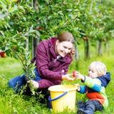 Kleiner Kleinkindjunge und -mutter, die rote Äpfel im Obstgarten auswählt Lizenzfreie Stockfotos