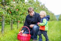 Kleiner Kleinkindjunge und -vater, die rote Äpfel im Obstgarten auswählt Stockbilder