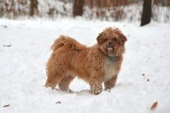 Kleiner Kreuzungs-Hund Stockfotografie
