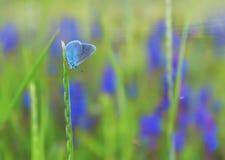 Kleiner Kupferschmetterling des Schmetterlinges auf dem Stiel- und Blumenmuster lizenzfreies stockbild