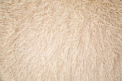 Kleiner langer weißer Pelz Stockfoto