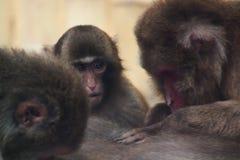 Kleiner lustiger Affe Lizenzfreie Stockbilder